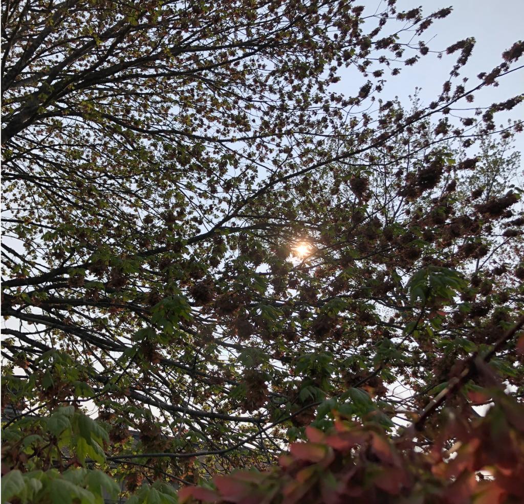 The sun seen through trees